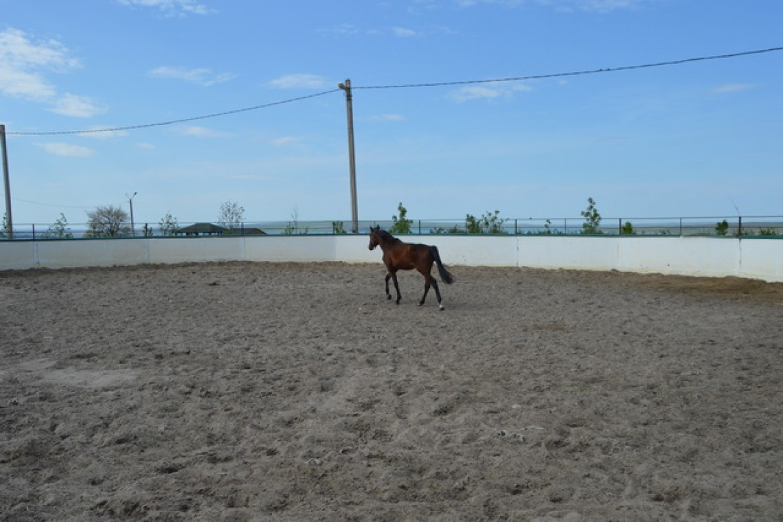 конные прогулки Ставрополь