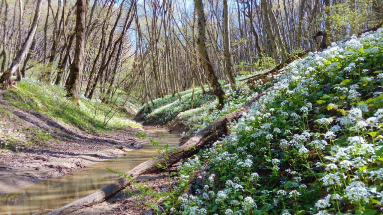 река Гремучка Русский лес Ставрополь