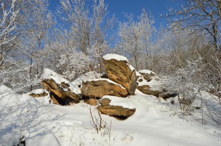 Мамайский лес Ставрополь